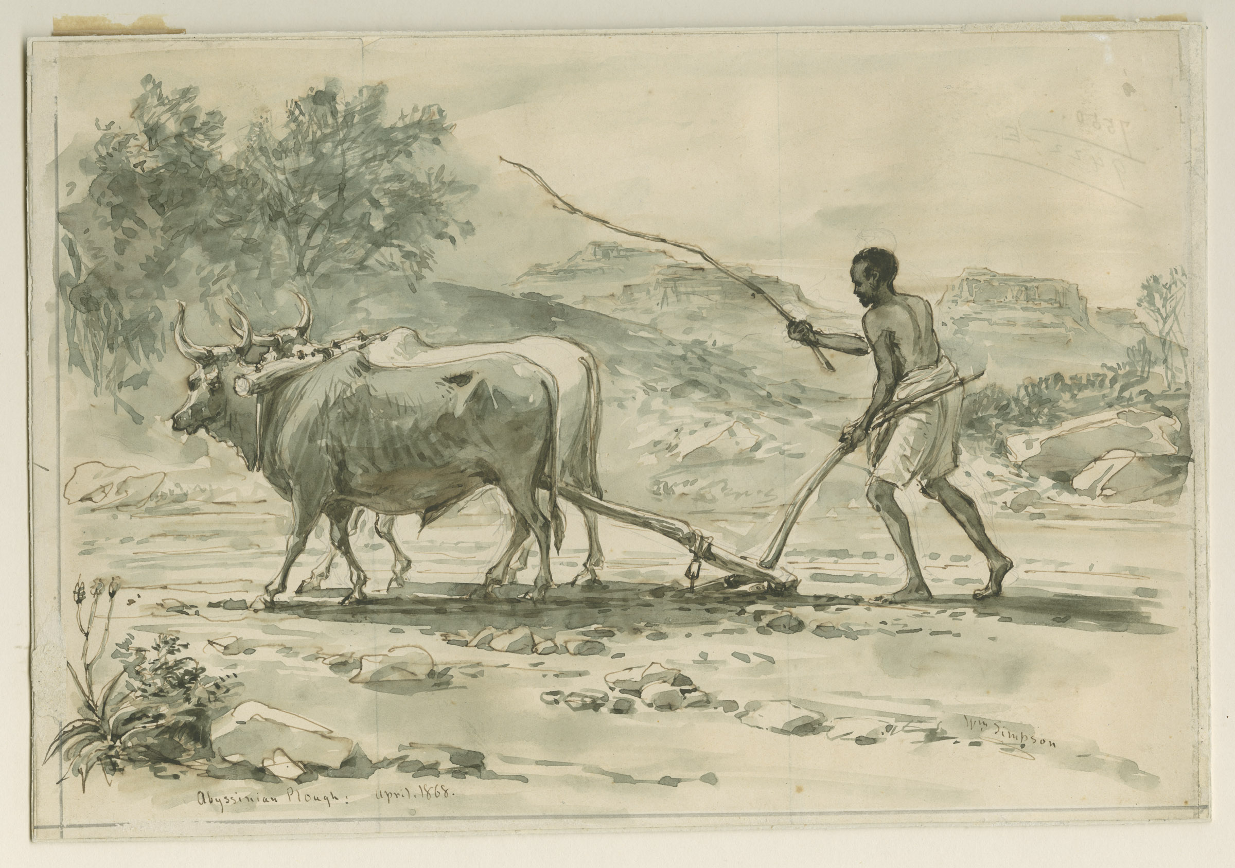 Ploughed Field Drawing Abyssinian Plough