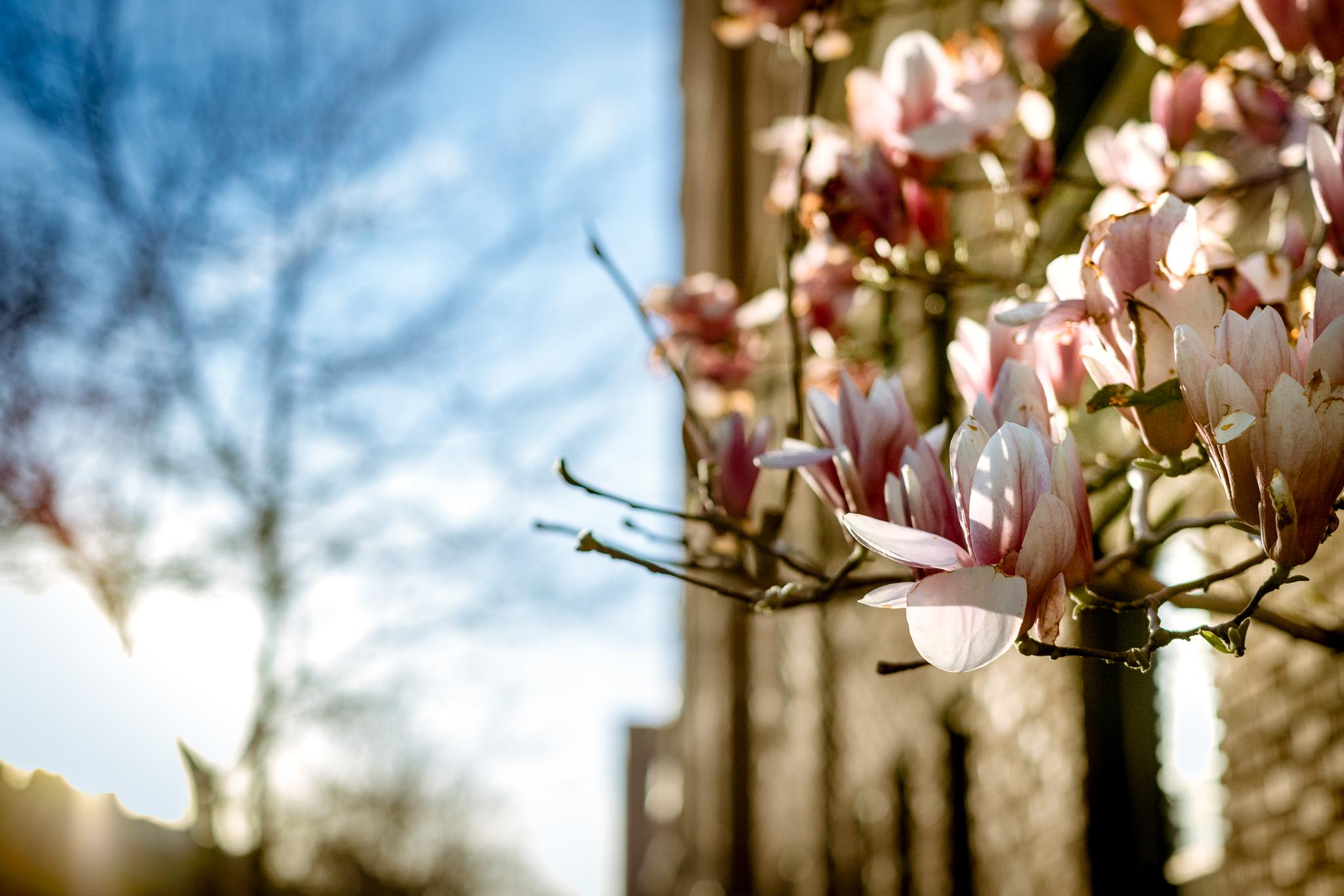 New York Spring Break-VA-160330-3556
