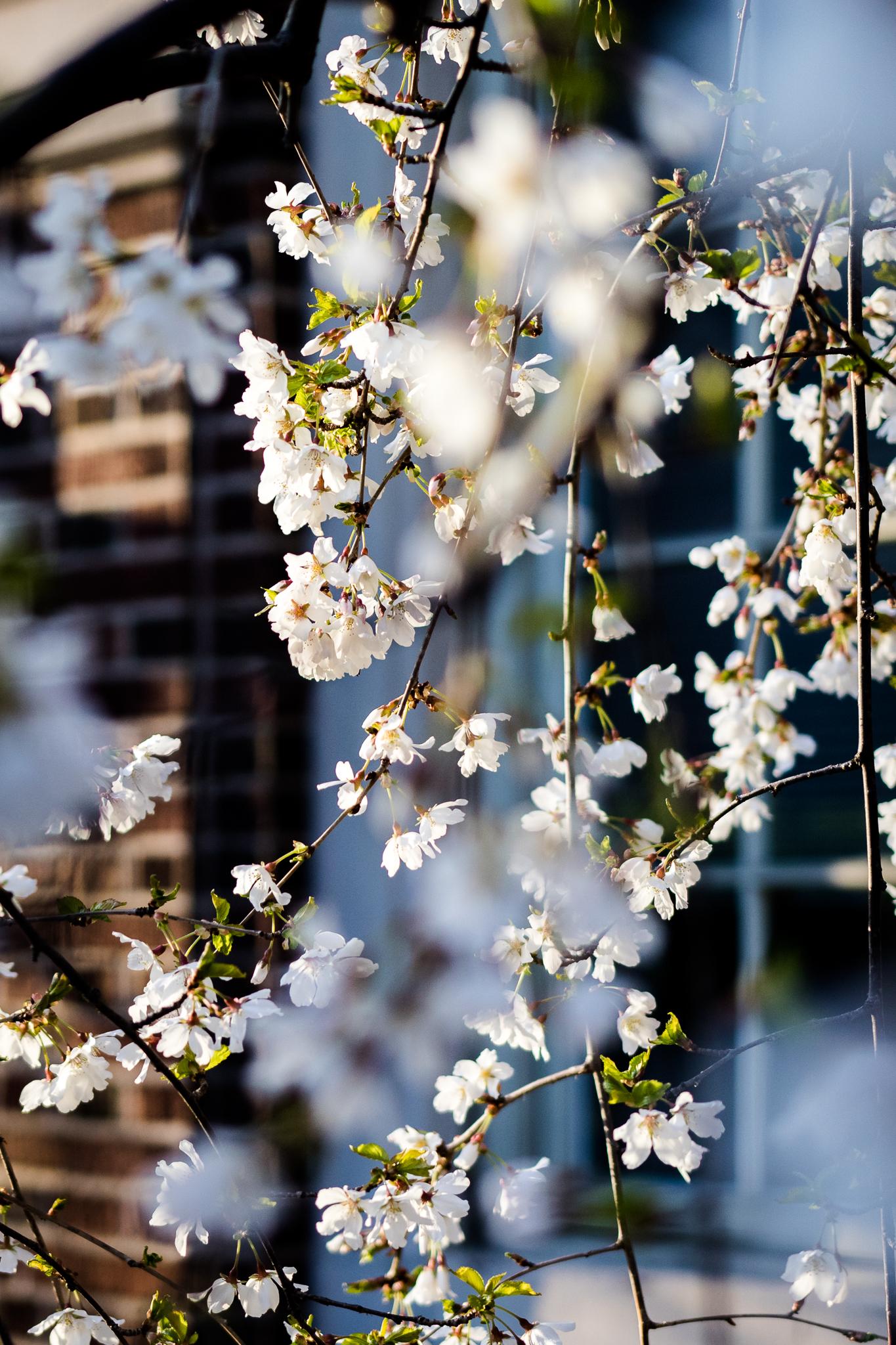 New York Spring Break-VA-160330-3566