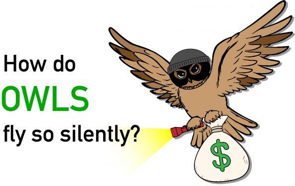 owlsFlySilently