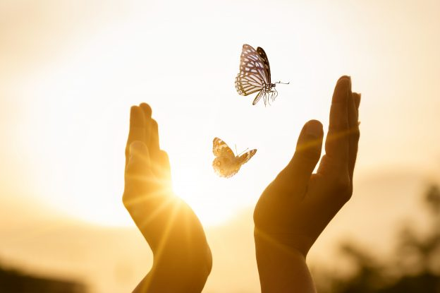2 hands raised up in the air with 2 butterflies in the center and the sun shining through.