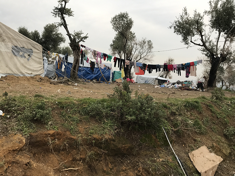 Photo of a clothes line hung between olive trees and a nearby tent.